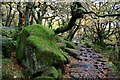 SK2579 : Moss covered rocks in Padley Gorge by Graham Hogg