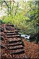 SK2579 : Leaf covered steps beside Burbage Brook by Graham Hogg