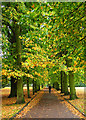 TQ2989 : Tree-lined path, The Grove, Alexandra Park by Julian Osley
