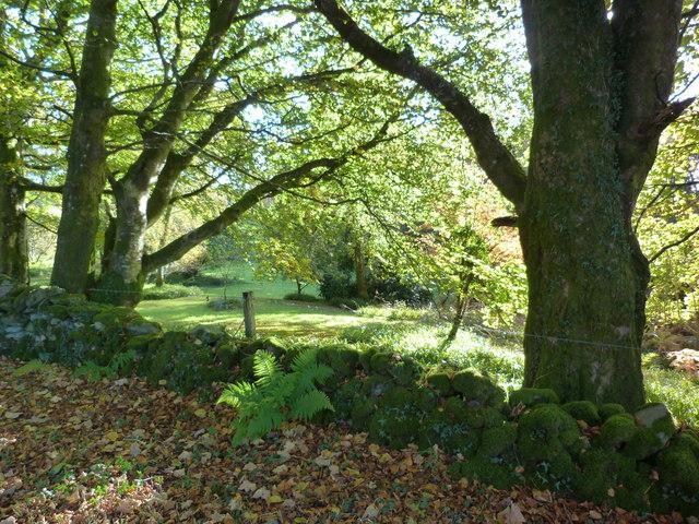 Grounds of Glenreasdell Lodge