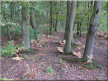 TL6902 : Galleywood Common by Roger Jones