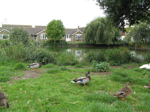 Peelings Lane Duck Pond