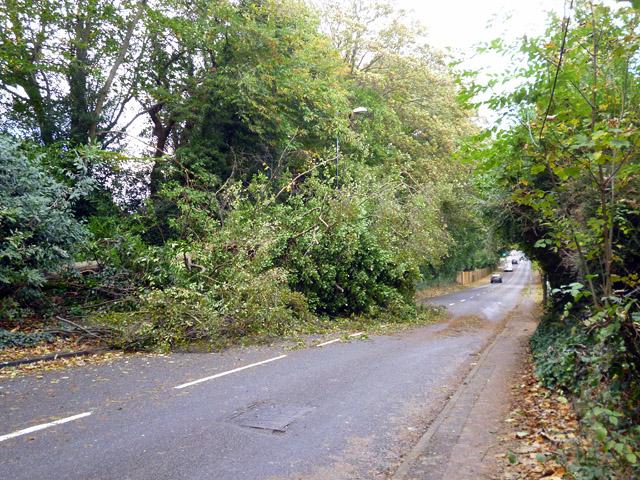 Fallen tree, Balcombe Road, Crawley by Robin Webster