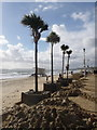 SZ0890 : Bournemouth: palm trees and cleared sand by Chris Downer