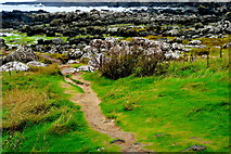 C9444 : Antrim Coast - Giant's Causeway - Path to Tidal Pools along Port Ganny  by Joseph Mischyshyn