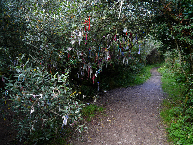 The cloutie tree near Madron Well by Chris Gunns