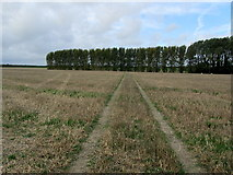 TR2357 : Footpath between Wingham and Ickham by Chris Heaton