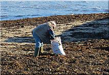 TA0390 : Gathering seaweed by Pauline E