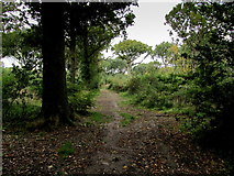 TR2057 : In Pine Wood by Chris Heaton