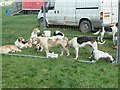 SJ0310 : Hounds at Llanfair Show by Penny Mayes