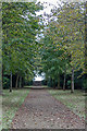 TG1828 : Woodland Area, Blickling Hall, Norfolk by Christine Matthews