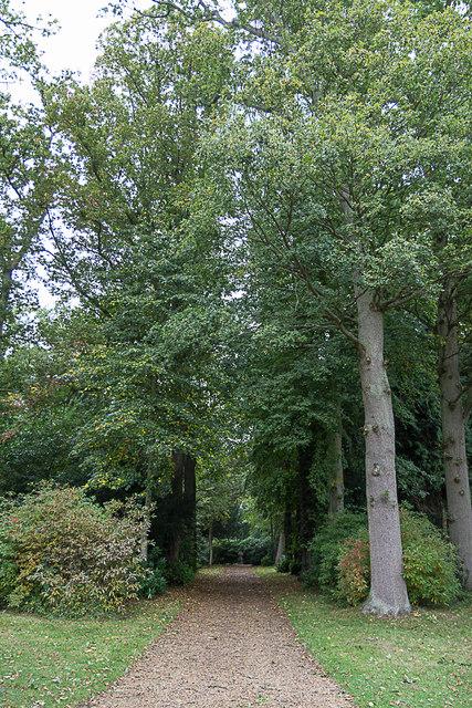 Woodland Area, Blickling Hall, Norfolk