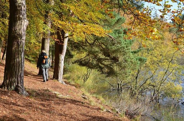 Woodland path by Cauldshiels Loch