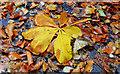 J4180 : Autumn leaves, Cultra by Albert Bridge