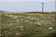 SH7683 : Sheep on Great Orme by Ian Capper