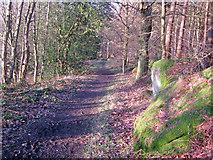 SK2669 : Pathway through Chatsworth Gardens by Trevor Rickard