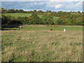 TQ4993 : Cows in pasture, Havering Park Farm, Hainault Forest by Roger Jones