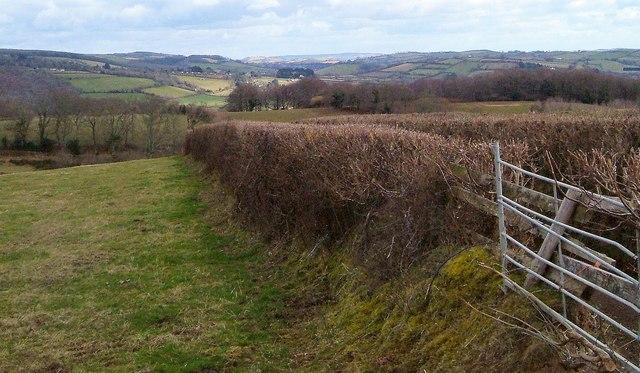 Field boundary near Staddicombe