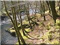 SX7171 : River Dart below Deeper Marsh by Derek Harper