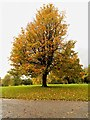 SD8304 : Autumn at Heaton Park by David Dixon