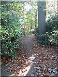 SE3239 : Footpath - Shadwell Lane by Betty Longbottom