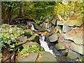 SD8204 : The Dell, Heaton Park by David Dixon