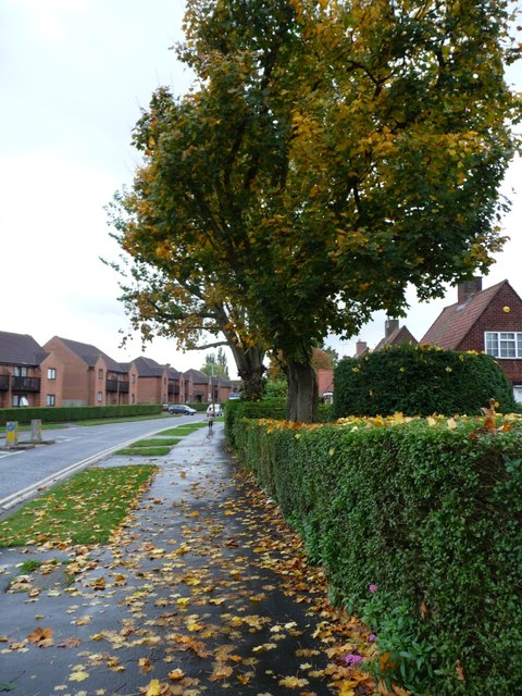 Autumn on Peartree Lane, Welwyn Garden City