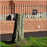 SO9096 : Felled hawthorn tree in Penn, Wolverhampton by Roger  Kidd