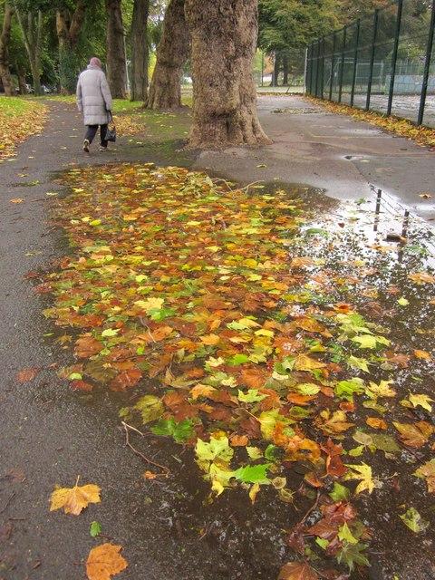 Leaf-filled puddle, Upton Park