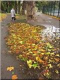 SX9164 : Leaf-filled puddle, Upton Park by Derek Harper