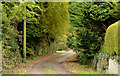 J4059 : The Old Cart Road, Saintfield (1) by Albert Bridge
