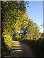 SX3361 : Lane at Tilland by Derek Harper