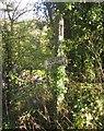 SX3361 : Signpost, Tilland by Derek Harper