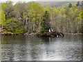 NN4907 : South East Corner of Loch Katrine by David Dixon