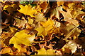 SP1833 : Autumn leaves by Philip Halling