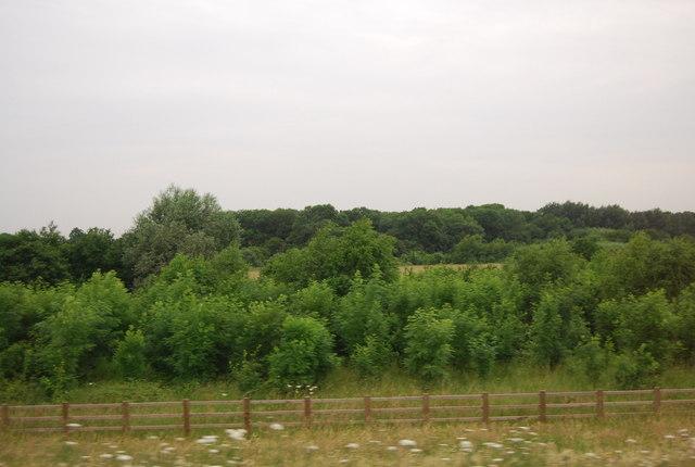 Belhus Wood Country Park