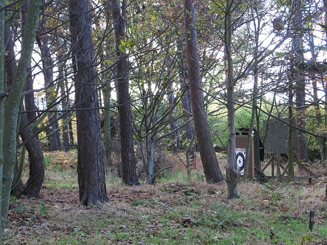 Pencraig Wood