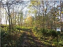 NO0644 : Butterglen - Letter road by Richard Webb