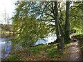 NO6069 : Esk-side footpath by James Allan