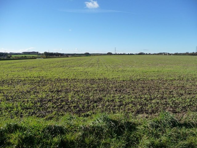 Emerging crops, west of the footpath to Bragdale
