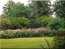 SP2865 : Rose-bay willowherb, Priory Park, Warwick by Robin Stott
