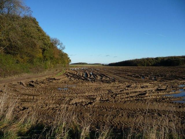Waterlogged field corner, south of Weet Wood