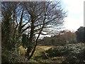 SY0180 : Meadow by Littleham Brook by Derek Harper