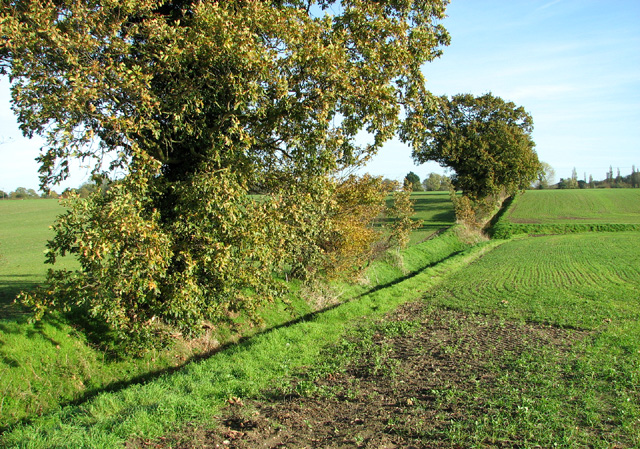 Trees on a field boundary