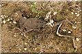 SK7962 : Ex rabbit by Richard Croft
