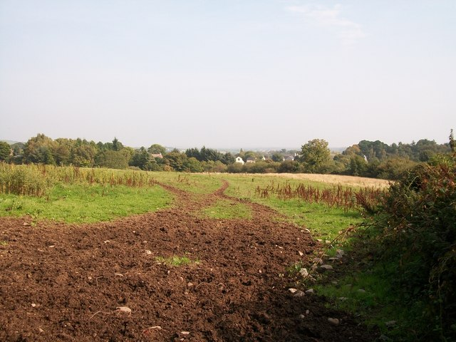 View across a grazing field towards houses on the Castlewellan Road (A50)