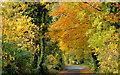 J4582 : Autumn trees, Helen's Bay by Albert Bridge
