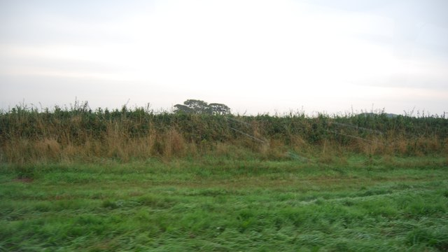 Grass verge by the B4584