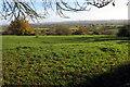 TL0633 : Rushy Meade Meadow by Philip Jeffrey