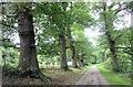 SO4565 : Croft Castle oak lined avenue by Stuart Logan